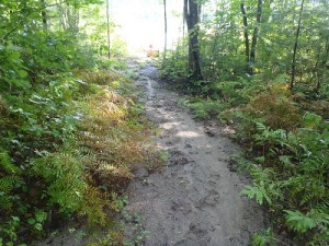 The rough footpath leading to the access point on Spectacle Pond #1