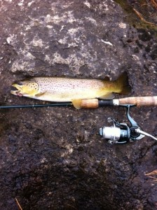 "A beautiful,14"" brown trout caught in the Nezinscott River"
