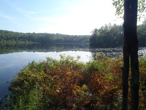 General view of Spectacle Pond #1