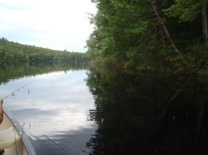 The shoreline of Bradley Pond is heavily wooded