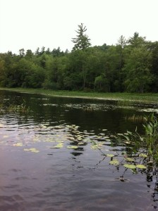A view of the shoreline on Little Moose Pond