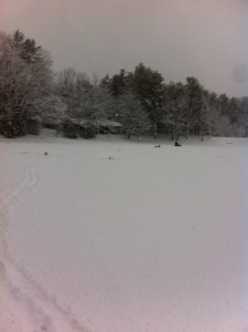 General view of Otter Pond #4