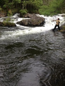 There's got to be trout living in this beautiful habitat!