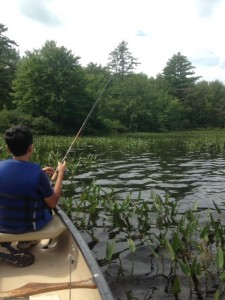 Good largemouth bass habitat can be found along the southern shore of Big Clemons Pond
