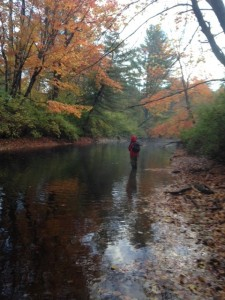 A quiet morning fishing for trout on the Pleasant River while leaf peeing. What a combination!