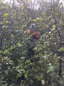 Bushwhacking is required in order to find the secret honey holes...