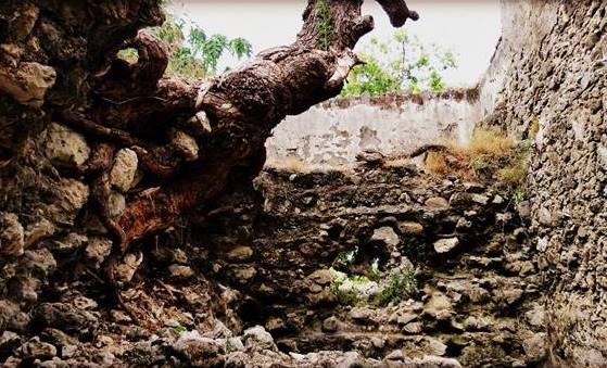 The coral walls of Dutch Fort at Delft island in Jaffna