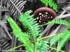 Ferns in Sinharaja Rain Forest