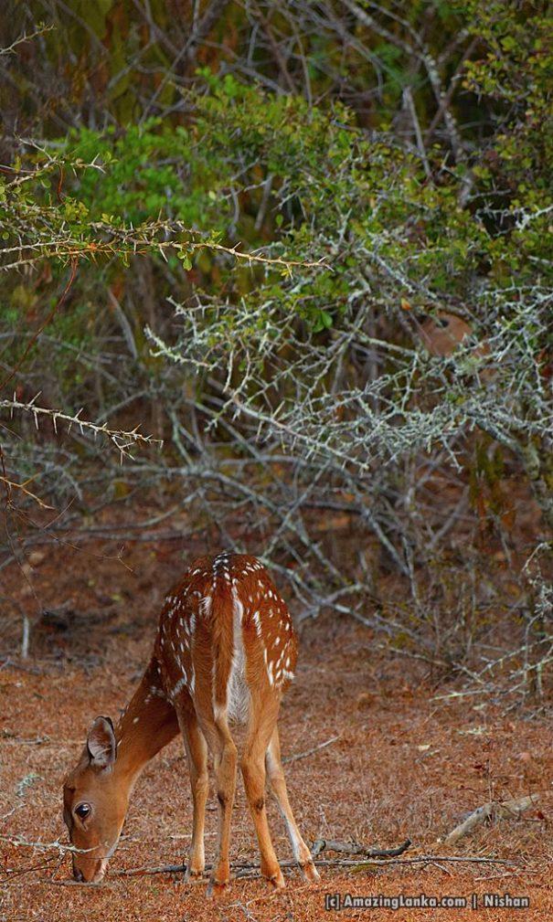 @ Lunuamvehera National Park