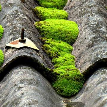 Layers of Moss on the roofs at Wewalthalawa