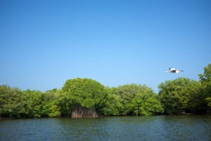 Mangroves at Tangalle close to the sea