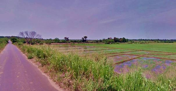 Paddy fields of Sandamadula where the Archaeological Site lies