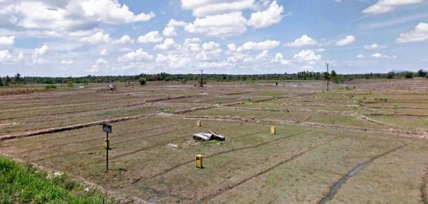 Archaeological ruins at the Kohombana village lying in the middle of a paddy field close the road.