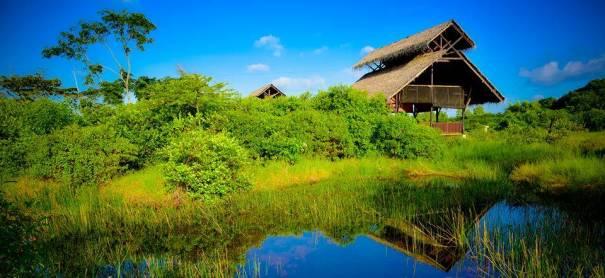 Thalawathugoda Biodiversity Study Park (Diyasaru Park)