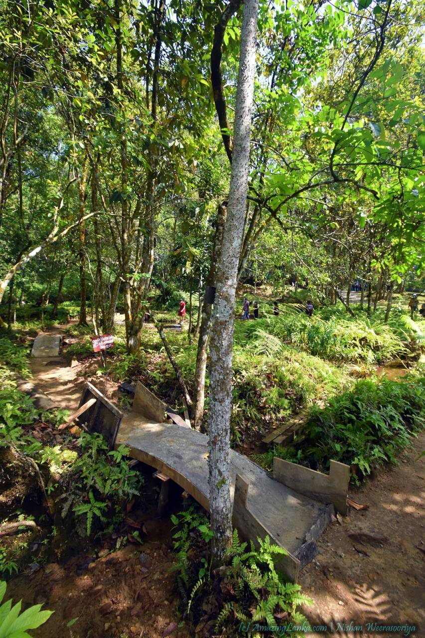 Fern Garden - Seethawaka Botanical Garden - සීතාවක තෙත් කලාපීය උද්භිද උද්යානය