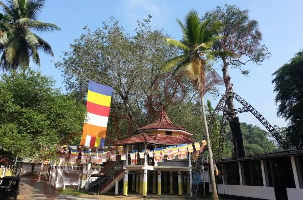 The 1000 year old ancient Na (Ironwood) tree (naga bodhi) planted by king Mahinda V in 1025 at Parakaduwa Bodhimaluwa Sri Nagabodhi Viharayathe