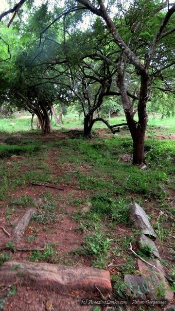 ගුරුගල්හින්න මෙගලිතික සුසාන භූමිය - Gurugalhinna Megalithic Burial Grounds