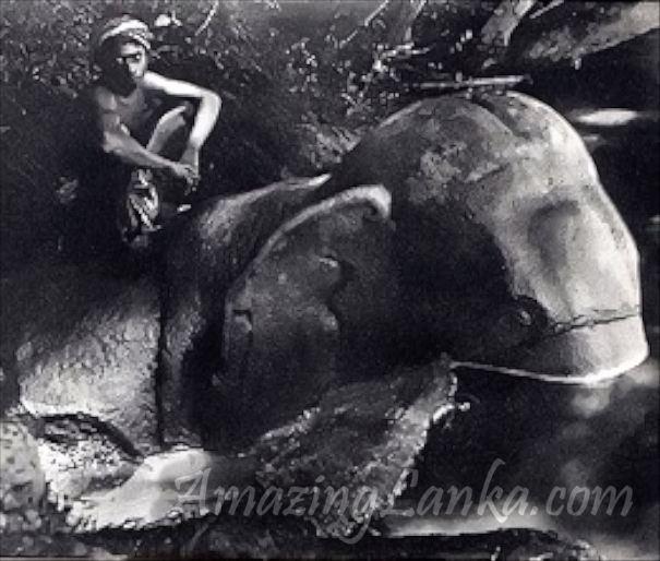 """1897දී බෙල් මහතා විසින් ගන්නා ලද ඩිගිටල් තාක්ෂණයෙන්වැඩි දියුණු කරන ලද ජයාරූපයේ කටුපිලාන ආනකල්ලු ගල් අලියා මහවැලි ගං තලාවේ ලැග සිටින අයුරු. A digitally enhanced photograph taken by HCP Bell in 1897 of the Katupilana Gal Aliya or """"Rock Elephant"""" on the banks of Mahaweli Ganga inAnakallu"""