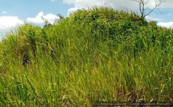 පාවත්කුලම මහඋළුක්වැව පුරාවිද්යා භූමිය - Pawathkulama Mahaulukwewa Archaeological Site
