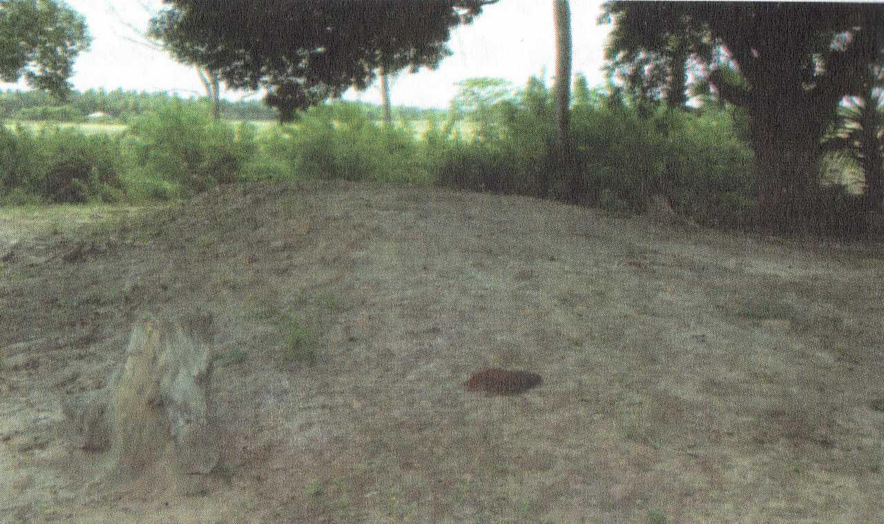 කුරුවිල්කුලම් බෞද්ධ පුරාවිද්යා නටබුන් අතර ස්තුපය. -  Kuruwilkulam Archaeological Site in Mulativu