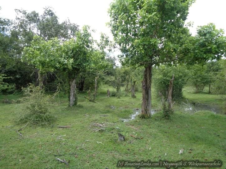 මාදුරුඔය නිම්නයේ සැඟවුණු වඩමුනයි (වඩමුනේ) මෙගලිතික සුසාන භූමිය - Wadamunai (Wadamune) Megalithic Burial Grounds in Maduru Oya Valley