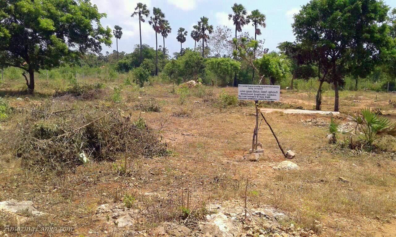 Land belonging to the ancient Tissa Maha Viharaya in Jaffna - යාපනයේ යළි පිබිදෙන දෙවනපෑතිස්ස සමයේ තිස්ස මහා විහාරය
