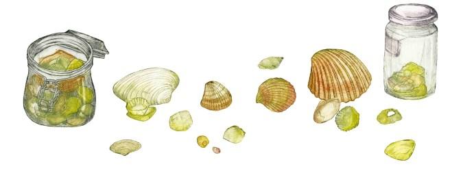06 shells