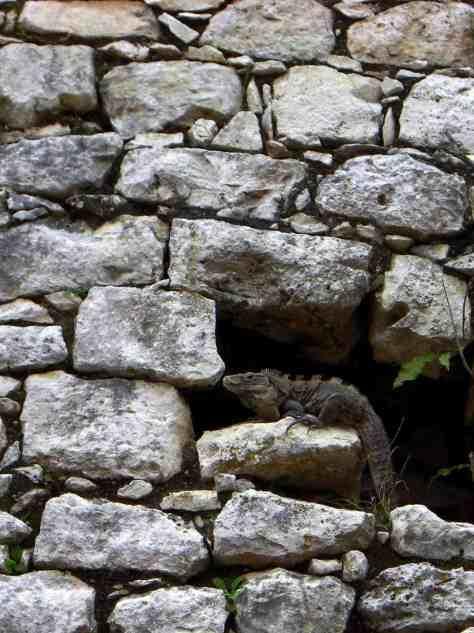 Leguan in den Ruinen von Chichen Itza