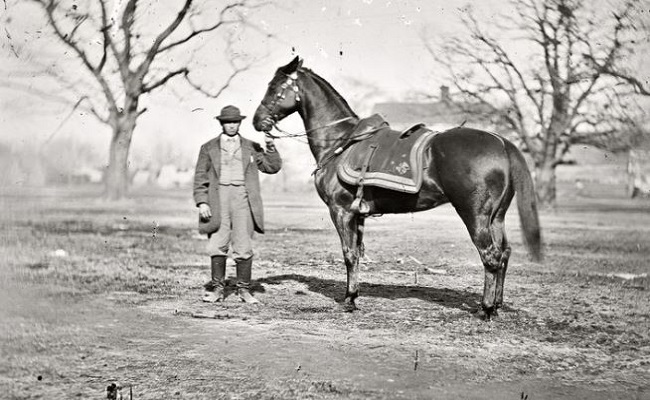 10 Of the World's Most Famous War Horses in Military History