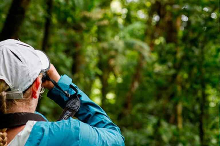 Rainforest Photography