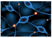 nerve system sending a signal graphic animation / Neuron