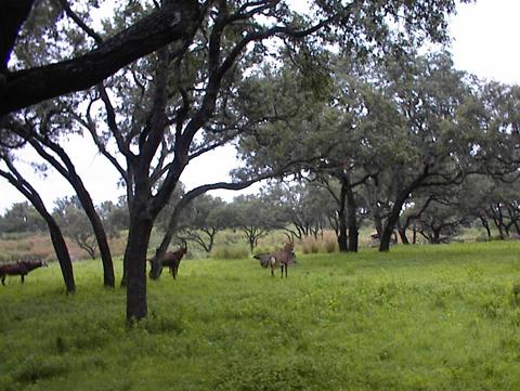 safari08