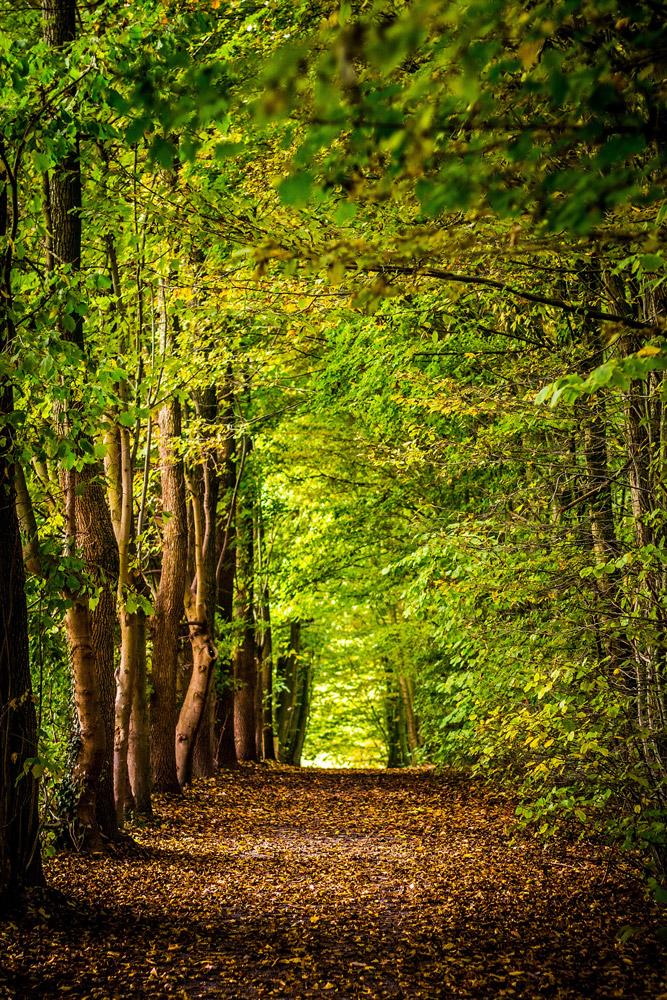 Weg im grünen Wald, Stille