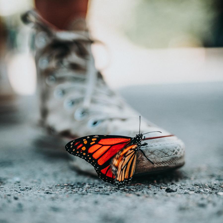 orange butterfly on shoe