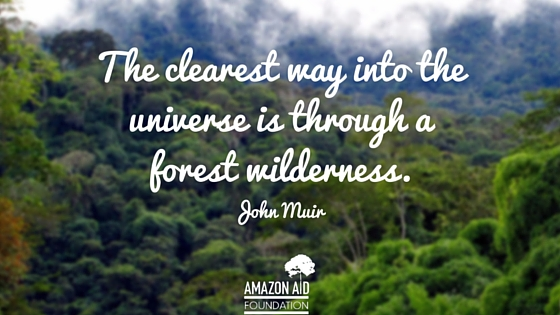 I wanted to share the kind of inspiration that i get from hugging these trees in the form of compiling quotes that i have read on the books and. 9 Inspiring Quotes About Forests Amazon Aid Foundation
