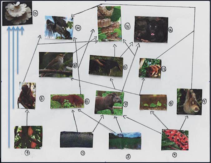 Meadow Food Web Diagram