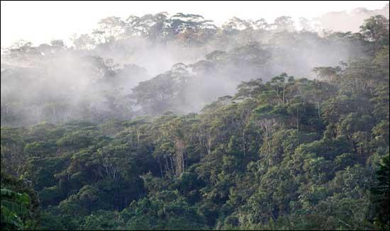 The Sarayaku forest at dawn