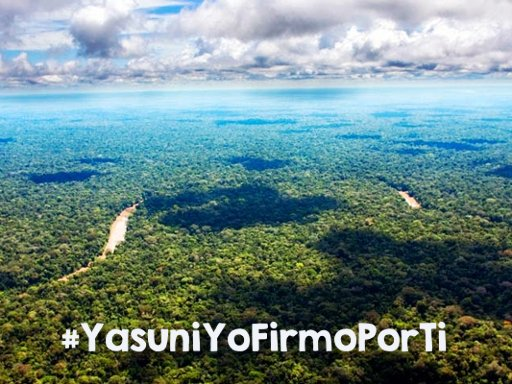Amazon Watch Supports the Call to Save Yasuní, the Last Wonder of the Amazon!
