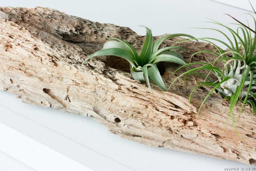 Driftwood DIY Airplant Holder