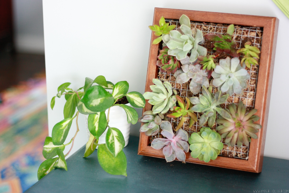 Make a succulent wall planter quickly and easily by upcycling a shadow box!