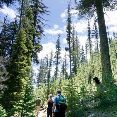 Oliver's Travels: Oregon Road Trip