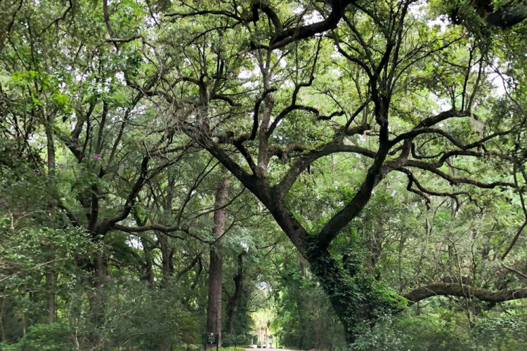 Oliver's Travels: Charleston, SC