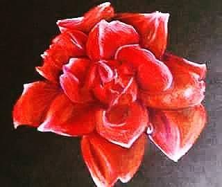rosebyambercurtis