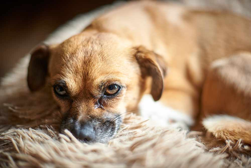 hundeschulung