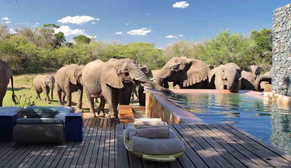 Phinda Private Game Reserve - Keith Jenkins
