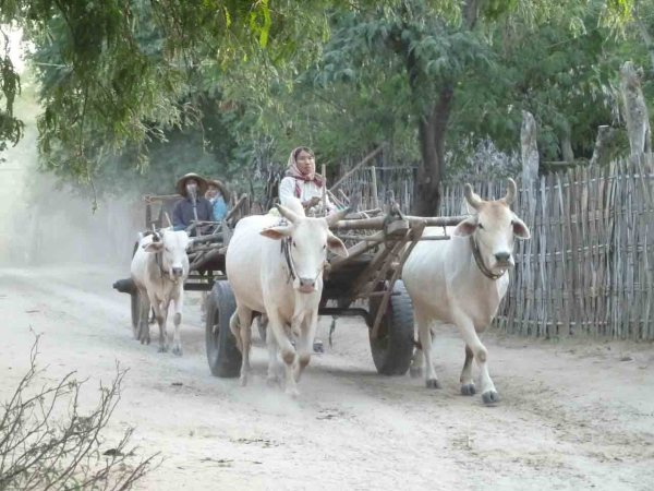 Famers on their oxcart in Myanmar.