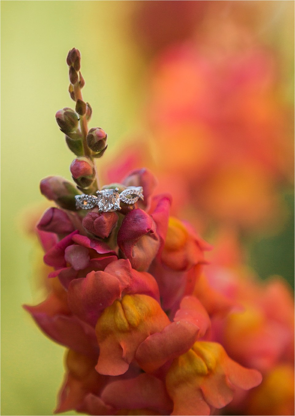 Diamond solitaire engagement ring on snap dragon flower.