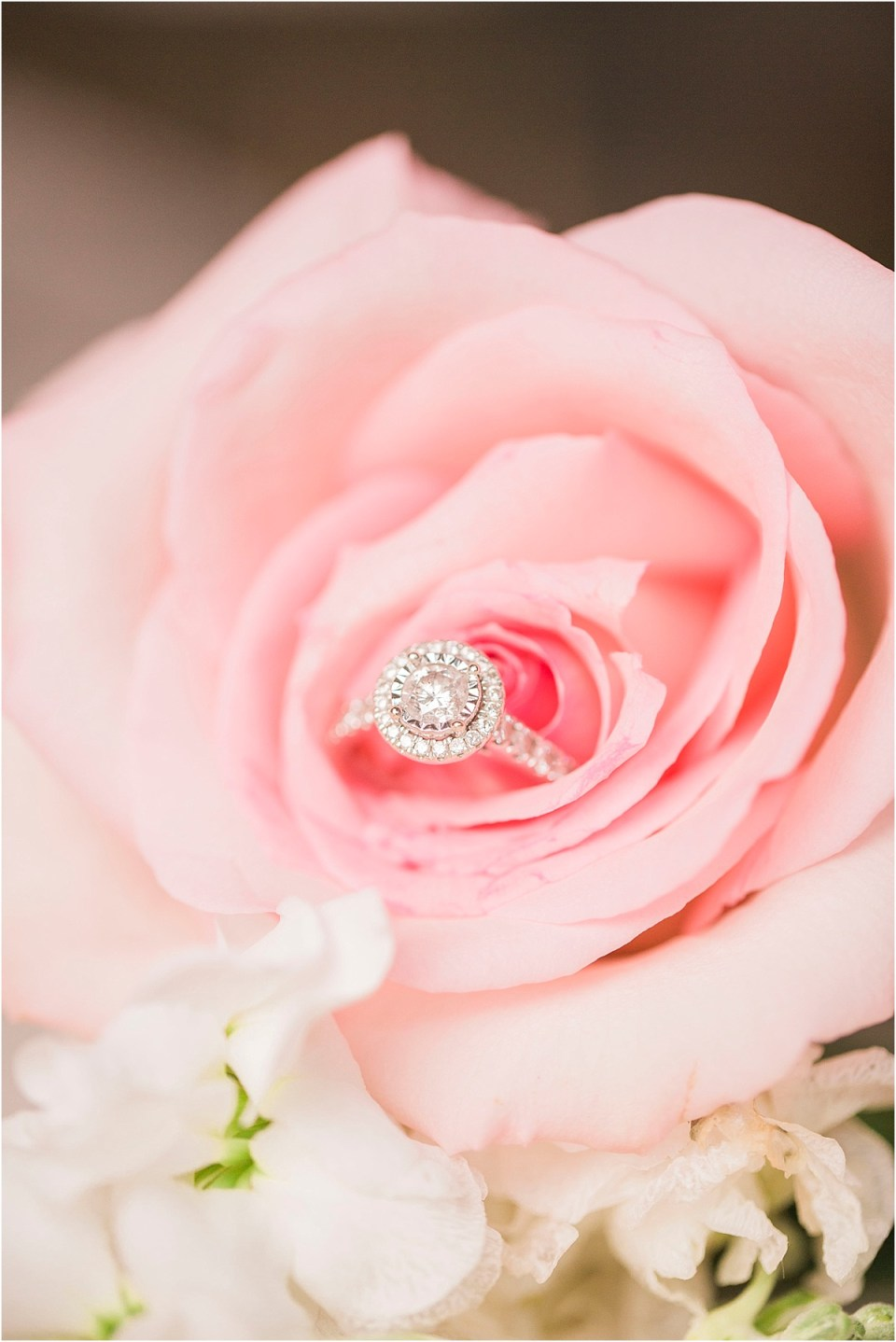 Engagement ring in a rose, North Carolina Wedding at Morehead Inn.
