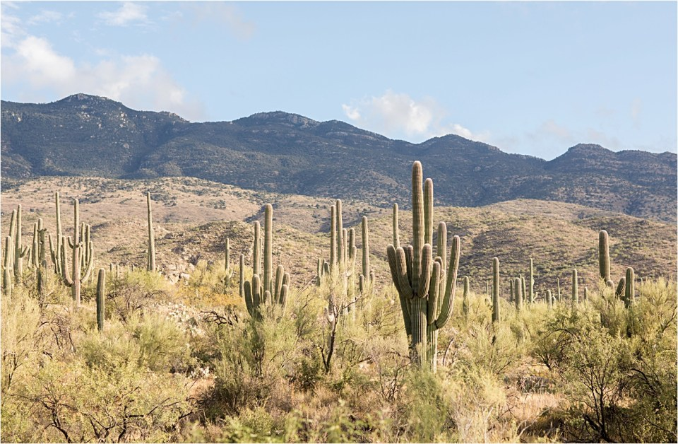 Tanque Verde Ranch wedding saguaro views.