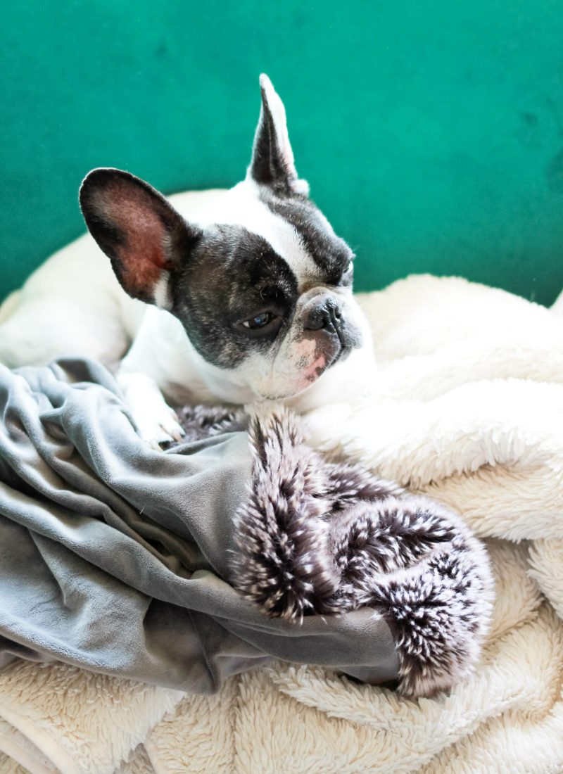 Frenchie Friday | A Married Adventure